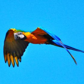 La recherche d'un perroquet ne rentre pas dans les attributions d'un représentant du personnel
